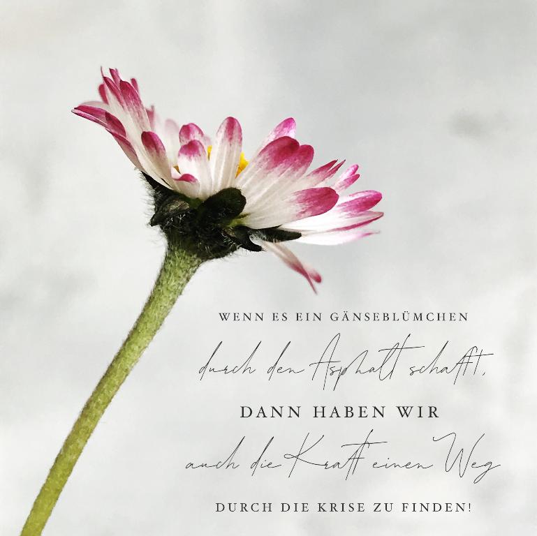 Gänseblümchen, Spruch, Wiesenblume