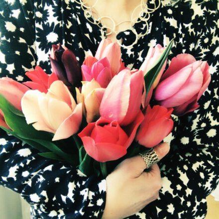 tulpen, frühling